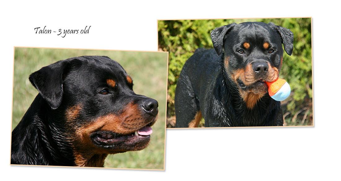 jill-puppis-06102013a